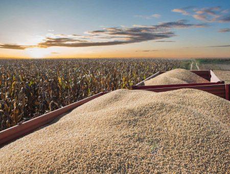 Qual é o panorama atual do agronegócio no Brasil?
